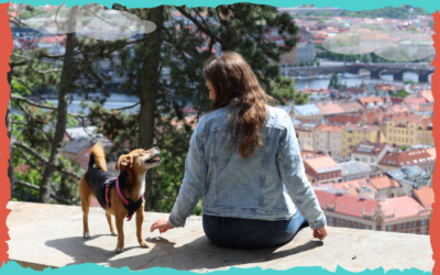 Educación canina: no todo es amor y paciencia