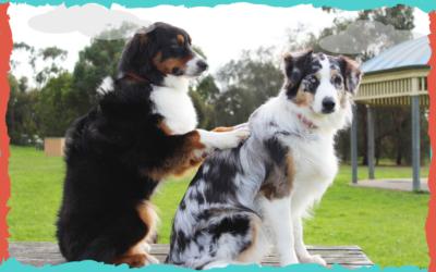 Socializar a tu perro mucho o poco… ¿qué es lo mejor?