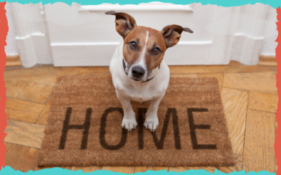 La llegada a casa teniendo perro