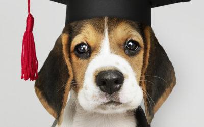 4 consejos para ayudar a que tu perro aprenda más rápido