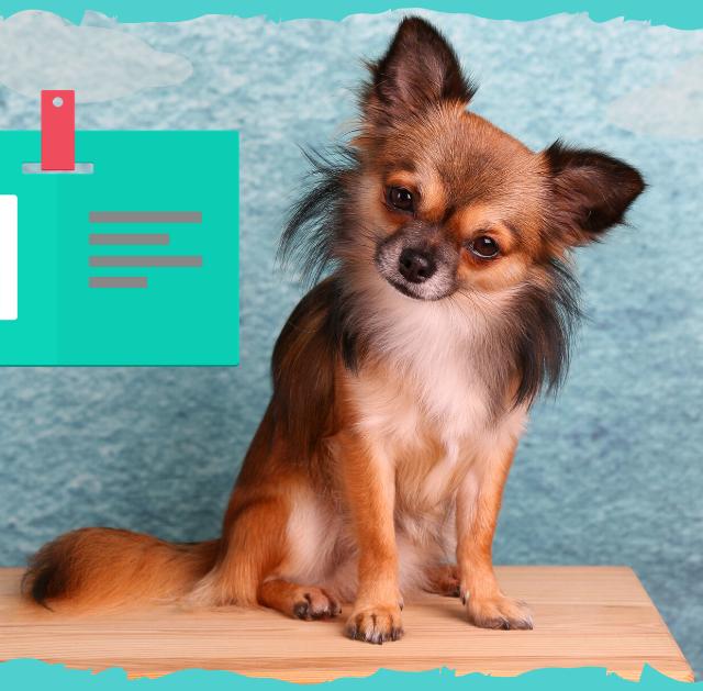 carnet-tener-perro - copia